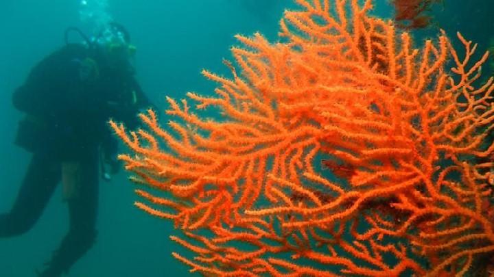 Club sous l'eau